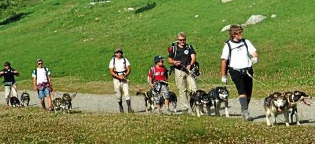 Husky Trekking