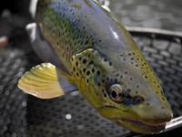 Pesca sportiva in torrente