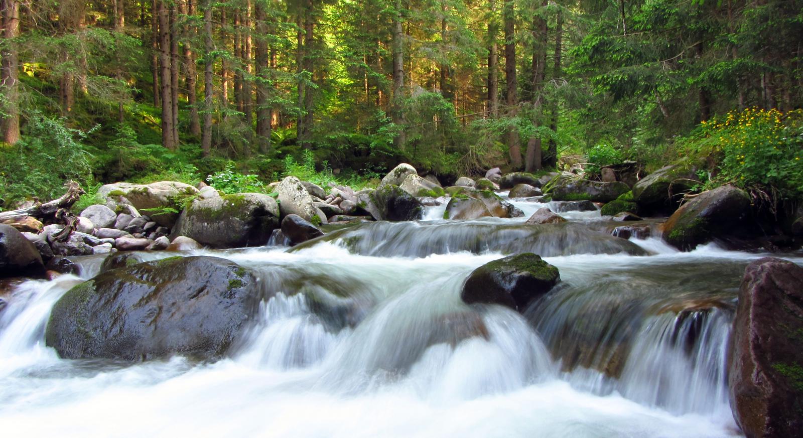 Fuggire dal Caldo: consigli su dove andare e cosa fare in Montagna