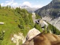 Le Alpi viste da un'Aquila in volo