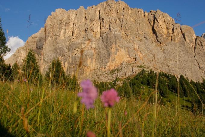 Fiori e Dolomiti