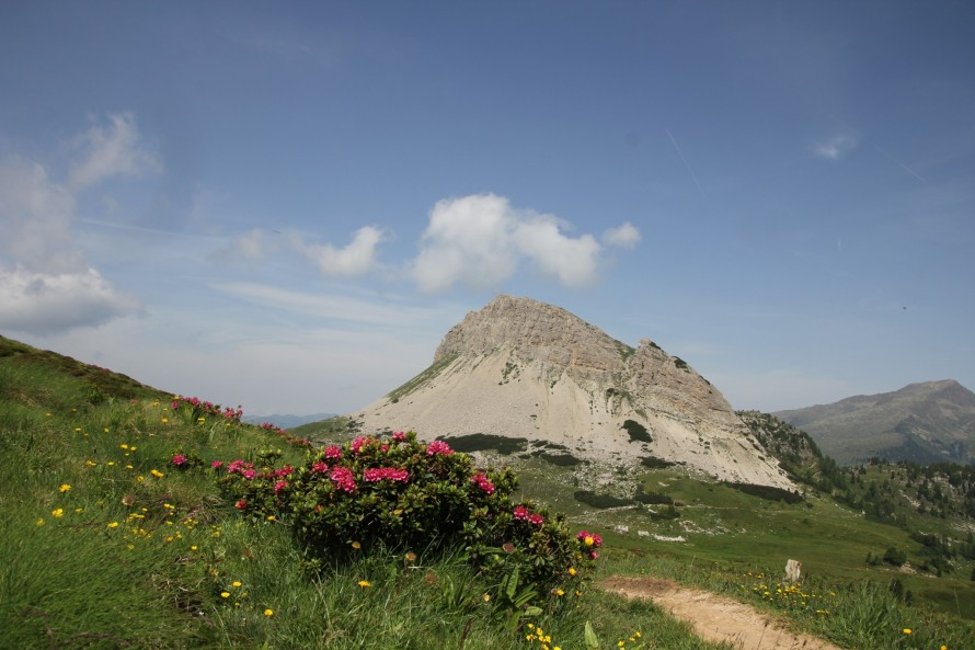 fiori monte castellazzo