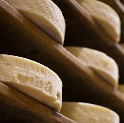 forme formaggio montasio dop