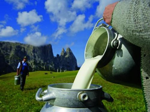 latte di montagna