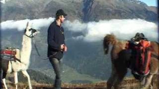 Escursione in Montagna con i Lama